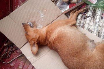 Denuncian el envenenamiento de diez perros callejeros