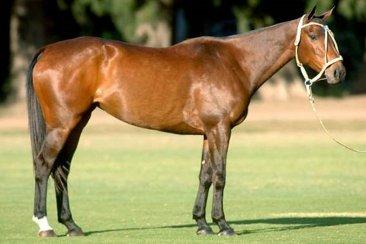 La Expo Rural de Concordia será parte del circuito entrerriano de caballos criollos