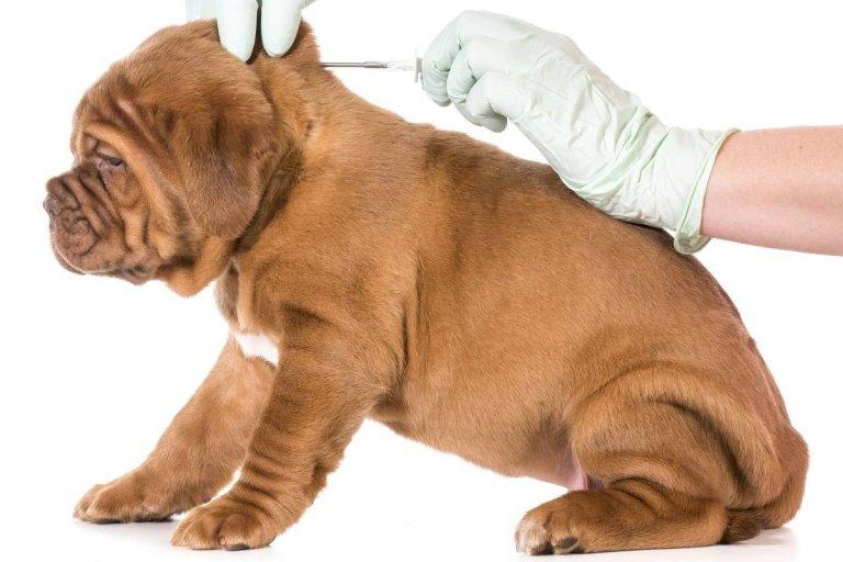 Por la superpoblación de perros en la vecina ciudad de Salto se obligará a ponerles microchips