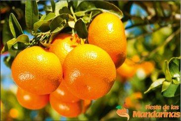 Se dio a conocer el programa completo de la 2º Fiesta Provincial de las Mandarinas