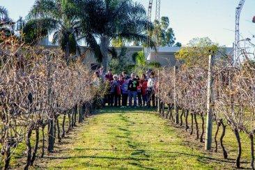 Los viñedos de Entre Ríos una opción más para estas vacaciones de invierno