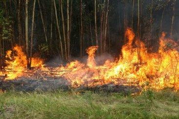 Un importante incendio forestal quemó más de sesenta hectáreas